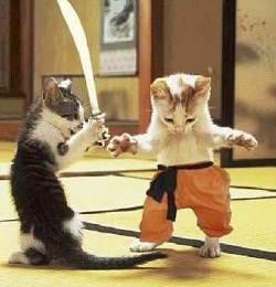 SAMURAI VS KUNGFU ....... !!!!