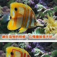 ikan ini unik banget jangn lupa bilang wow ya