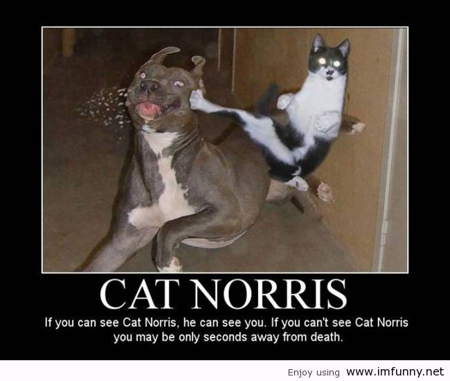 kucingnya chuck norris neh..
