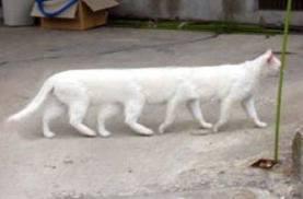 Wow...... ternyata ada juga ya kucing berkaki banyak yaitu jumlahnya ada 8 !!! Selain bentuk kakinya unik, kucing ini juga lucu dan jinak loh guys !!! Tetapi harga kucing ini sangat mahal sekali, yaitu mencapai 50 juta lebih lho !!! Mau ???