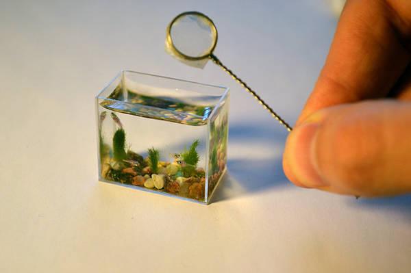 Anatoly Konenko dari Siberia menciptakan akuarium terkecil di dunia yang bisa difungsikan. Menggunakan sebuah kubus kaca berukuran 30 x 24 x 14 mm, diisi dengan batu dan pasir warna warni, berisi 10 ml air dan ikan kecil. Juga memiliki filter.