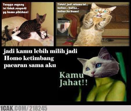 Haha Kucing Homo