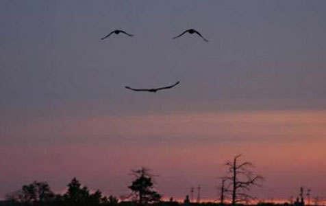 Yuk! Lihat Formasi Formasi Cantik Burung di Udara