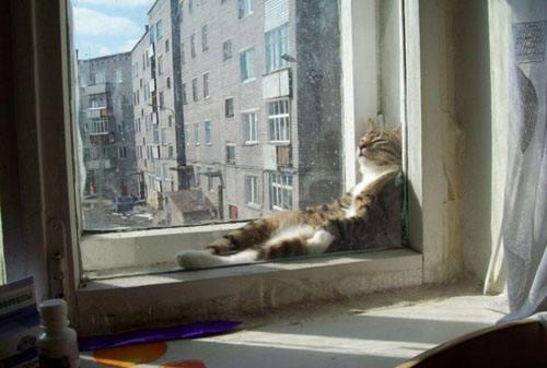 Pose Lucu Kucing-Kucing Saat Tertidur, Menggemaskan? wow nya....^0^