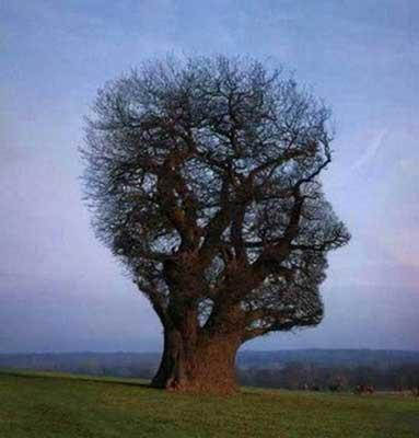 Pohon Unik yang menyerupai kepala manusia.