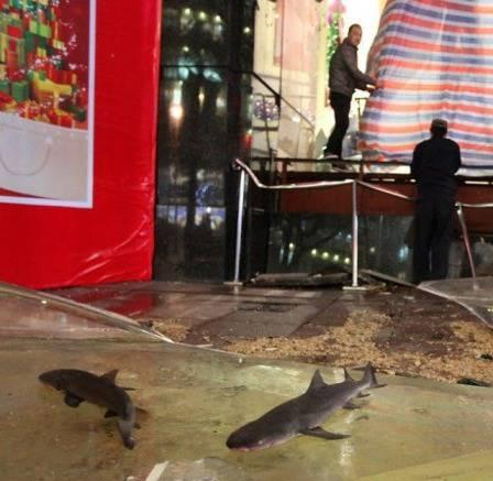 Aquarium pecah ikan hiu keluar semua