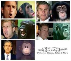 Monyet dan gorilla adalah bagian dari keluarga primata (bagian dari keluargamu…). Gorilla jalan dengan tangannya jadi semua berat badannya akan tertumpu pada tangannya. Monyet punya IQ 174. (Hayooo, pinteran mana, kamu ato monyet??) :)
