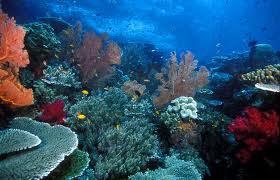 Pulau Raja Ampat Inilah keindahan pulau raja ampat yang masih bersih, indah, dan jernih airnya sehingga kita bisa melihat flora dan fauna di pulau ini. gmn minat berkunjung??? ~WOW~FOLLOW~