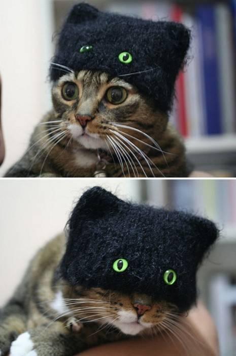 Topi kucing yang unik