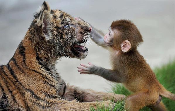 wkwkkwkwk :D monyet dan macan berpelukan ......... jgn lupa WOW nya ;)