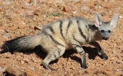 10 Binatang mamalia yang Jarang di Jumpai