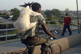 Unik banget ya ada seseorang sedang membonceng kambing di blakang badan nya yg sedang naik sepeda!!! Hahaahaaa.... :) :) :) Yang setuju gambar ini unik jangan lupa bilang Wow nya ya!!! :)
