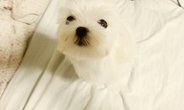 anjingnya SUZY MISS A lucu yg bilang lucu tekan WOW :D