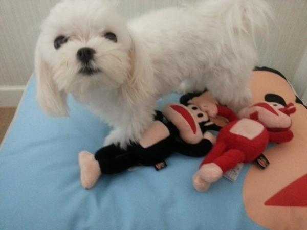 anjingnya SUZY MISS A lucu mirip boneka pulu gemesin yg bilang lucu tekan WOW :D