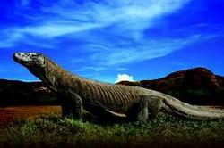 TN Komodo Tembus 28 Besar 7 Keajaiban Alam