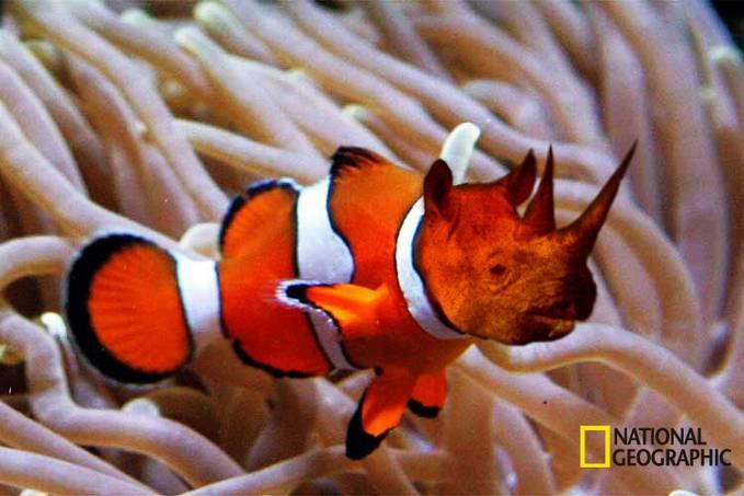 Penemuan spesies baru yang belum terpecahkan asal - usulnya, dengan bentuk perpaduan 2 hewan (ikan badut, badak).
