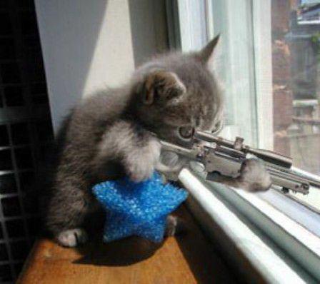 kira2 nih kucing pengen nembak siapa ya?