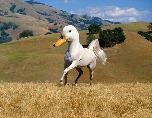 sotosop hewan --> Angsa + Kuda