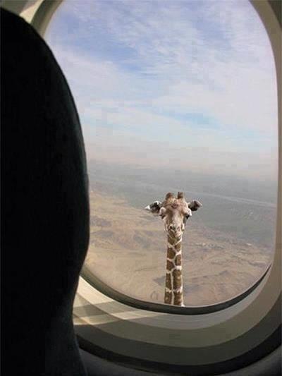 Gimana nih ekspresi agan klo ngeliat ginian pas lagi naik pesawat... :D