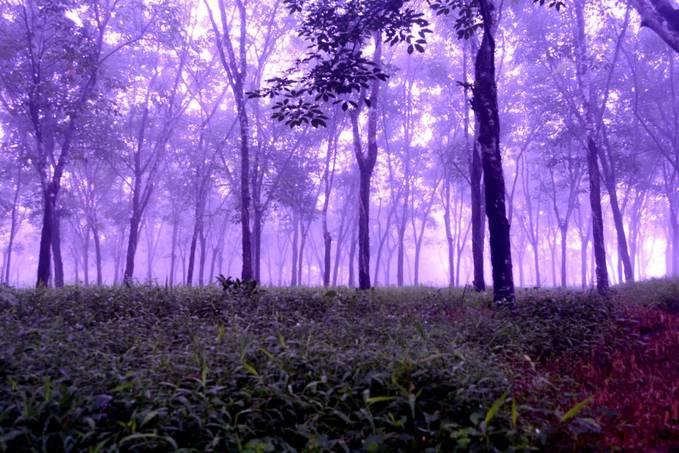 Sunrise di hutan karet, Sukabumi