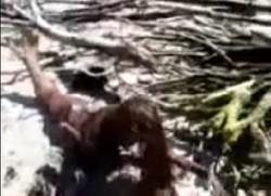 Menghebohkan Putri Duyung ditangkap di sulawesi