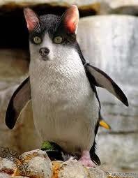 wkwkwkwkwkk,, Inilah Perkawinan Silang antara Penguin Dengan Anjing.. Kasih WoW yaa