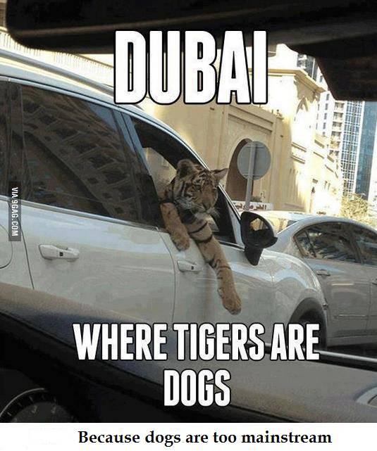 D dubai Macan d jadiin binatang Piaraan, anjing dh biasa.. too mainstream.