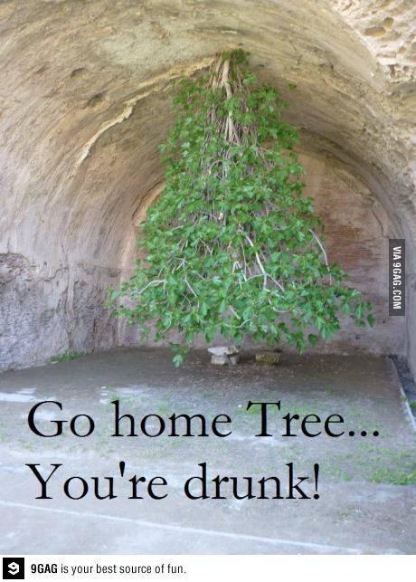 Pohon koplak .