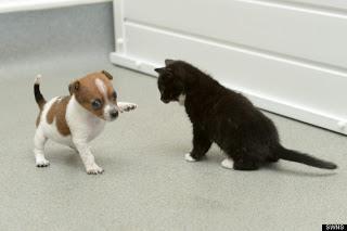 """Ada tebak-tebakan :D Pertanyaan : Kenapa kucing selalu berantem dengan anak anjing? """"ANAK ANJING"""" lho, bukan anjing ;) Yang bisa jawab aku kasih hadiah WOW sebanyak 50 WOW"""