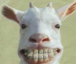 bukan manusia aja yang pakai behel kambing juga,,,, Berapa WOWnya buat si Kambing,,,,,,, hahahaha,,,,,, :) :D :) :D :) :D