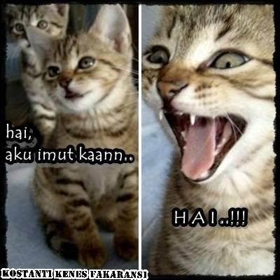 Inilah yang akan dilakukan kucing peliharaan Anda, bila Anda abaikan...WoW.. :p