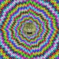 wow apakah anda melihat gambar kucing ini bergerak,tapi jangan lupa wownya ya