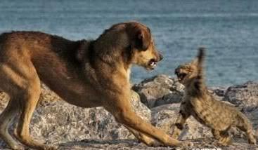ciaa..ciaa..ciaa..., apa yang kira2 kucing bilang sama si anjing, pilih salah satu: 1. emang aku berani sama kamu :p 2. hai frends, toss dulu donk! :p 3. Jangan masuki wilayahku!! :p WoW dulu & kasih komen.. :p wkwkwkwk :D :D :D :D :D :D :