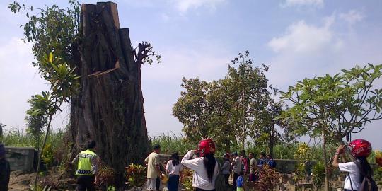 Fenomena berdirinya pohon raksasa di TPU Dusun Joho Desa Sumberjo Kecamatan Ngasem Kabupaten Kediri diyakini masyarakat setempat tidak lepas dari keberadaan makam Mbah Abdul Majid. Mbah Abdul adalah seorang tokoh desa yang telah meninggal dan d