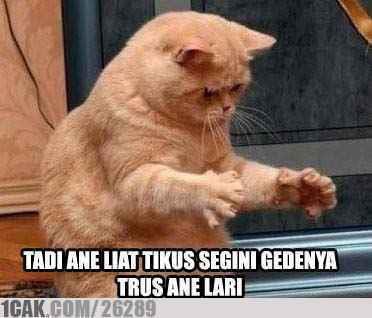 lucu nggak expresi kucingnya,, :D