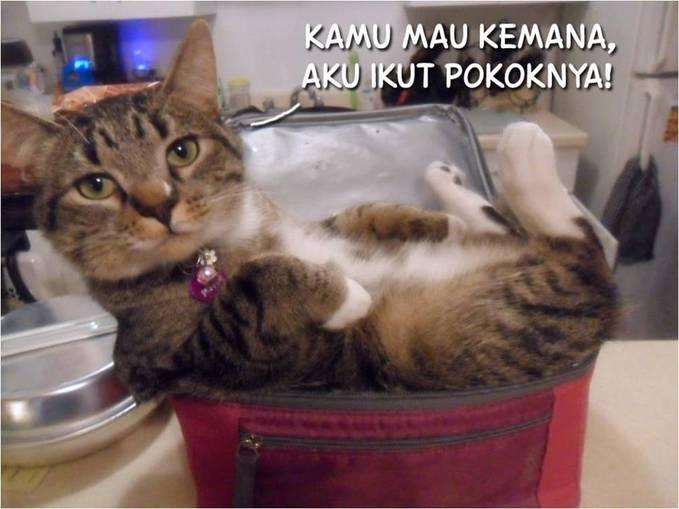 Wuihâ?¦ada kucing ngotot mau ikut kemana-mana nih. Siapa nih yang punya kucing peliharaan semanja ini?