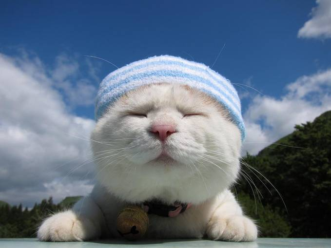 Kucing nya gemes gak?