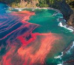 Red Tides adalah Sebuah fenomena alam yang terjadi karena berkumpulnya mikroorganisme di pesisir tempat bergabungnya air dari muara, laut atau air sungai dan membuat air menjadi berwarna ungu dan merah. WOWnya dong