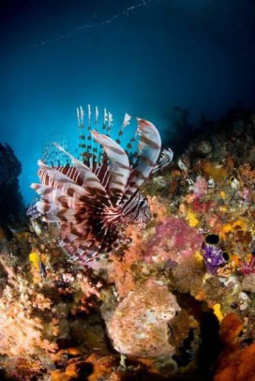 pemandangan alam bawah laut raja ampat
