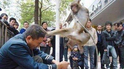 Ketika di di ikatkan monyet itu dia langsung berjurus kungfu