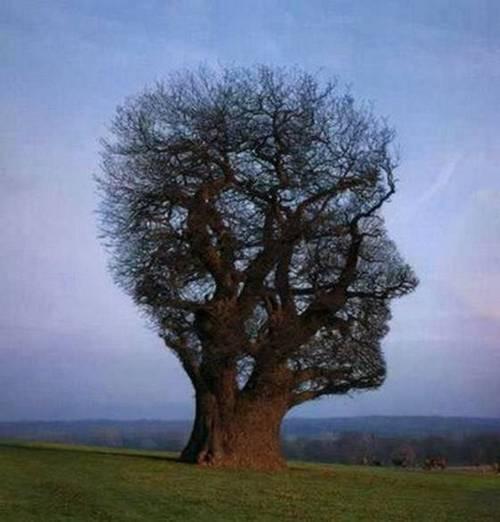 unik gilaa kocak nih pohon gambarnye gambar kepala orang gan :D