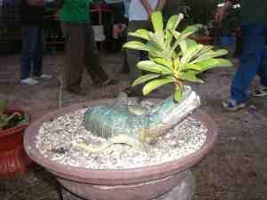 AAT ini Komunitas Pencinta Alam Hijau Batam (Kupaham) sedang menggelar pameran tanaman hias di Pelataran Engku Putri Batam Centre. Berbagai jenis tanaman hias dipamerkan di halaman Kantor Wali Kota Batam itu.
