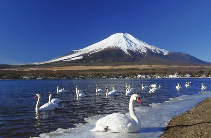 Keindahan pemandangan alam Danau Kawaguchi dengan latar belakang Gunung Fuji di Jepang..