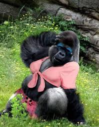 gorilla????