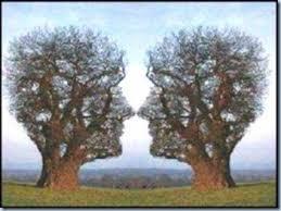 wow, pohon kembar 2 mirip kepala manusia