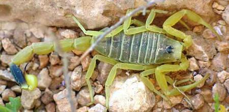 Kematian Stalker Scorpion adalah jenis nama menyenangkan, bukan? Tampaknya cukup bagus.