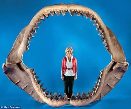 Hal ini membuat hiu putih besar di Jaws terlihat seperti ikan mas. Tapi ini raksasa rahang hiu prasejarah berasal dari predator terbesar yang pernah ada di Bumi.