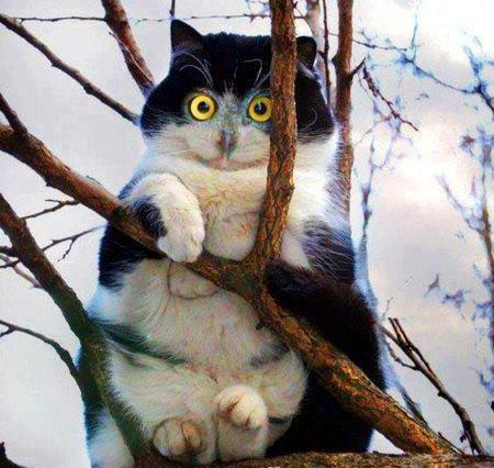 Bro, Sis ini lah hasil persilangan antara kucing dan burung hantu menurut kalian gi mana :D| WOW nya dong !!!