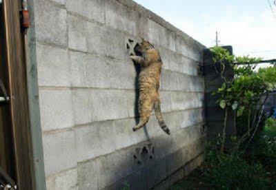tukang ngintip yang d kutuk jadi kucing garong..