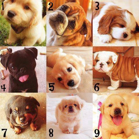 coba kamu pilih mana yang paling lucu menurutmu wow nya y teman :)